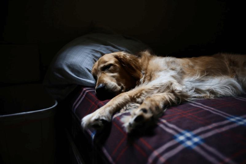 A dog sleeping on a bed