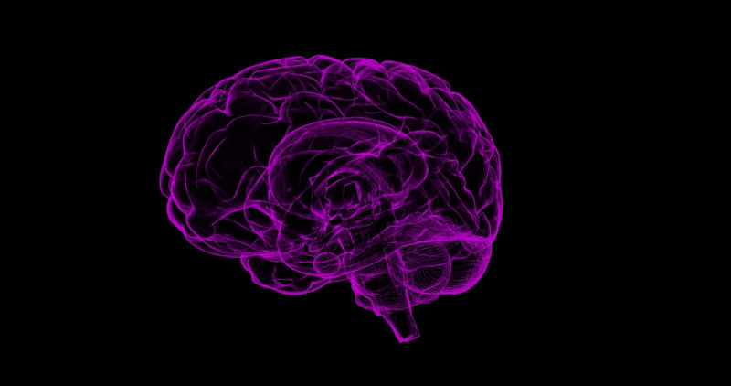 illustration of purple brain on black background