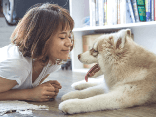pet dog on floor